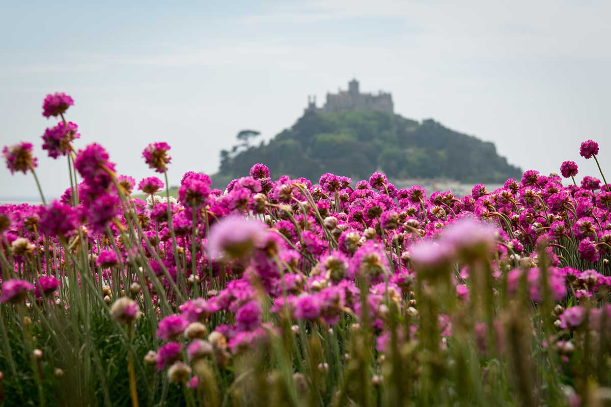 Sea Thrift and St Michael's Mount - Cornwall landscape photography by Stephen Banks